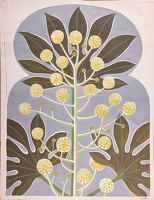 Artist Mary Adshead: Study of a Fatsia Japonica in Bloom, c. 1960